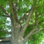 Widok drzewa z dołu