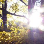 Słońce za drzew