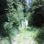 Scieżka w lesie