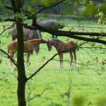 Konie 02