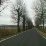 Droga z drzewami