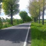 Droga z drzewami latem