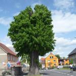 drzew_04