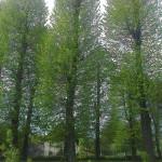 drzew_05