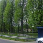 drzew_06