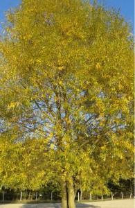 jesiennedrzewo
