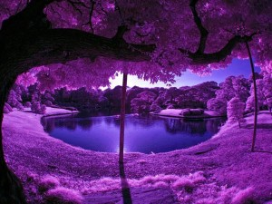 natures-beauty-in-purple-color