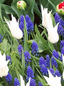 wiosnaKwiaty